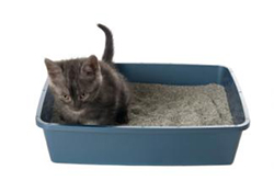 Cat Care Tips - Litter Box