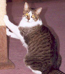 Cat Care Tips - Choosing a Scratching Post