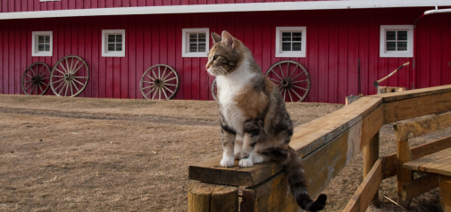 Barn Buddy Program for Cats
