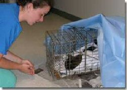 Feral Cats - trap-neuter-vaccinate-return program